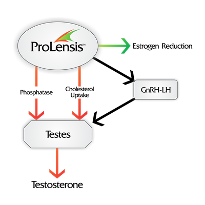 ProLensis.png